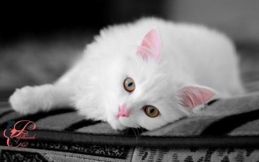 Gattino_Perfettamente_Chic