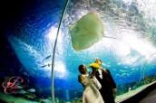 Ocean_Park_Manila_Matrimonio_bizzarro_Perfettamente_Chicc