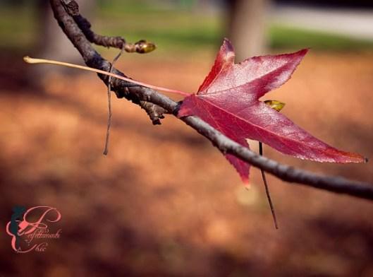 autunno_perfettamente_chic
