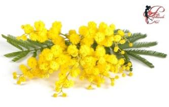 mimosa_perfettamente_chic_1.jpg