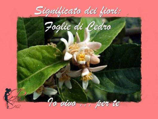 fiori_di_cedro_perfettamente_chic_.jpg