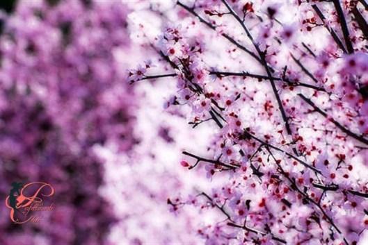 primavera_perfettamente_chic.jpeg