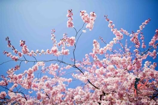 primavera_perfettamente_chic.jpg