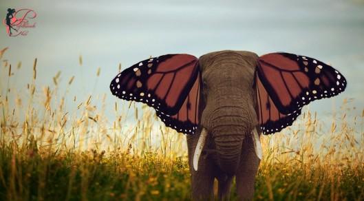 buongiorno_elefante_perfettamente_chic_5.jpg
