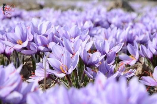fiori_perfettamente_chic_2.jpg